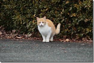 2020_01_16_山の猫_00