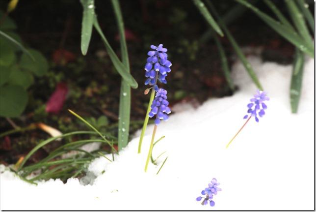 02_18_2020_雪景色_06