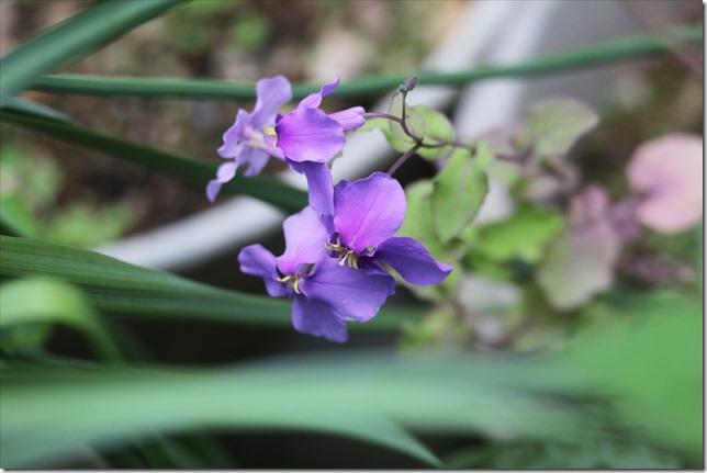 2020_03_22_我が他の花たち_05