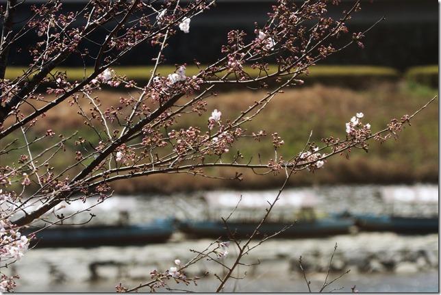 2020_03_23_桜と屋形船_00