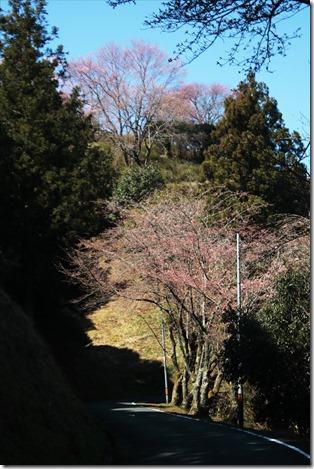 2020_03_23_桜風景_03