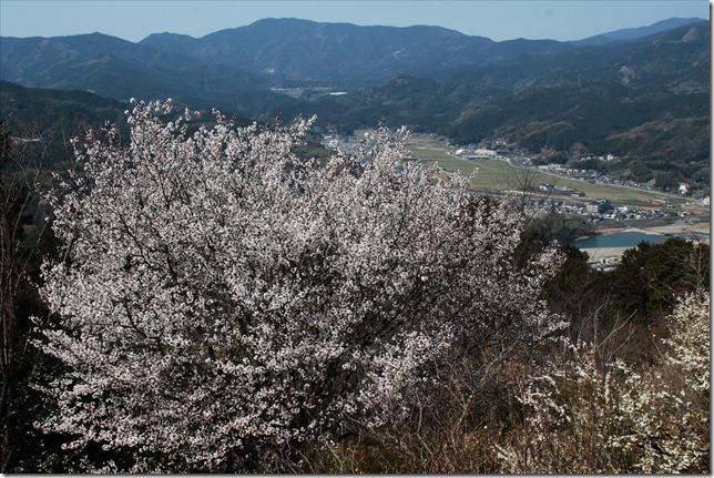 2020_03_24_桜風景_05
