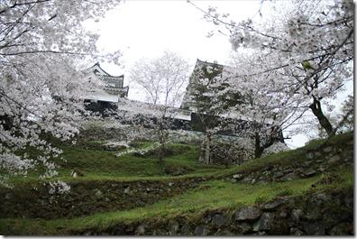 2020_03_30_お城と桜_03