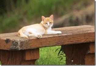 山の猫_2020_07_08_00