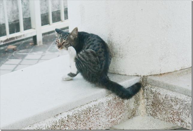山の猫_2020_08_04_00