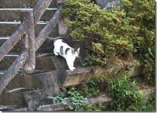 山の猫_2020_08_17_01