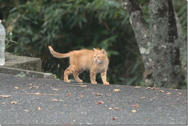 猫ちゃん_2020_10_16_00