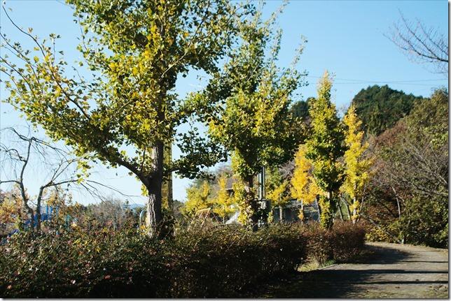 公園にて_2020_11_11_00