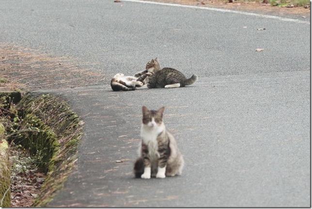 猫ちゃん_11_23_2020_00