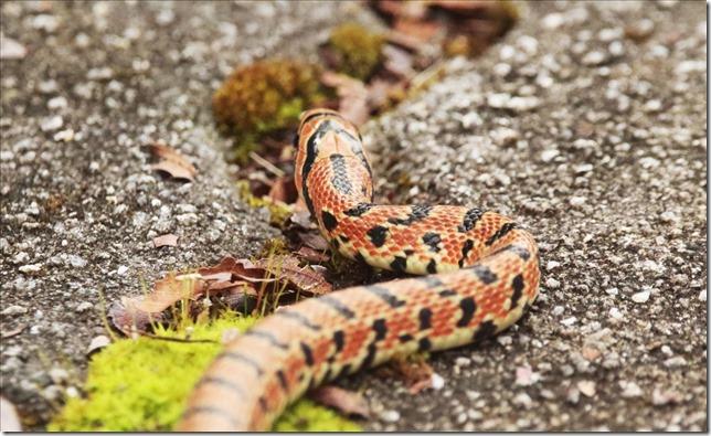 蛇_2020_11_06_00