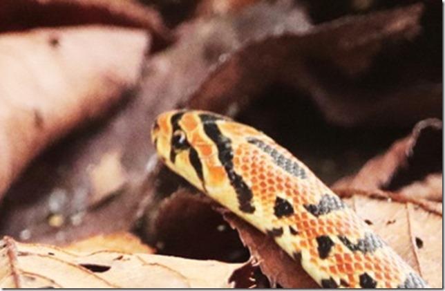 蛇_2020_11_06_03