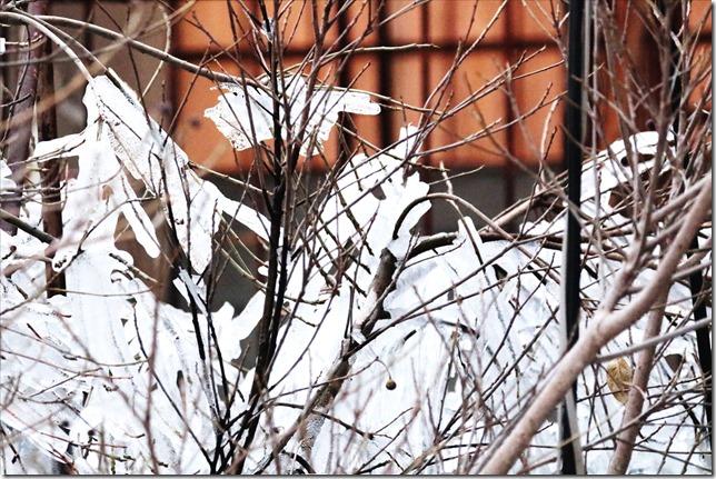 雪景色_01_11_2021_01