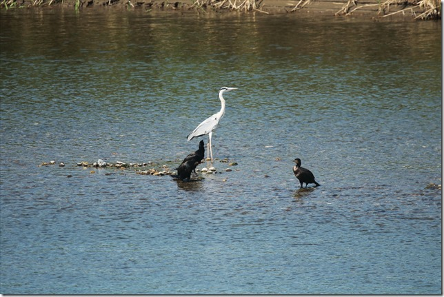 白い鳥黒い鳥_10_06_2021_00