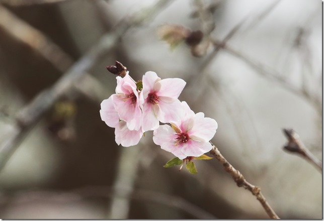 桜_10_20_2021_02